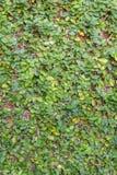Grünpflanze auf dem Wandhintergrund stockfoto