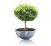 Grünpflanze auf der Erde, Kugel Lizenzfreie Stockfotos
