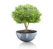 Grünpflanze auf der Erde, Kugel Stockfotografie