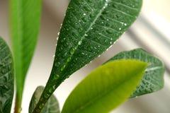 Grünpflanze auf einem Fenster Lizenzfreies Stockfoto