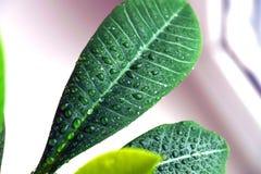 Grünpflanze auf einem Fenster Stockfotos