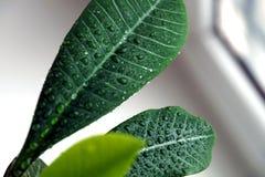 Grünpflanze auf einem Fenster Stockfotografie