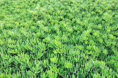 Grünpflanze auf einem vollen Hintergrund Lizenzfreie Stockbilder
