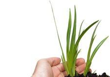 Grünpflanze auf einem weißen Hintergrund Stockfotos