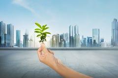 Grünpflanze auf menschlicher Hand auf moderner Stadt Lizenzfreie Stockfotos