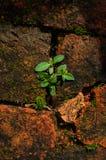 Grünpflanze auf Tapetenhintergrund lizenzfreies stockfoto