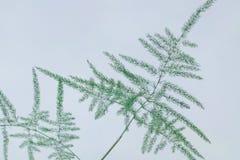 Grünpflanze auf weißem Hintergrund stockfotografie