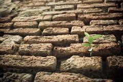 Grünpflanze auf Ziegelsteinbürgersteig Lizenzfreies Stockfoto