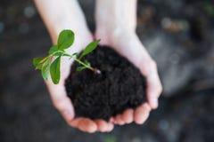 Grünpflanze in den Händen Lizenzfreie Stockfotos