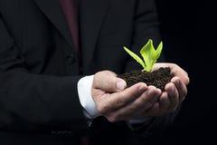 Grünpflanze in der Geschäftsmannhand Lizenzfreie Stockfotos