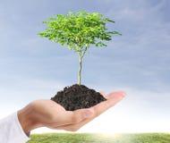 Grünpflanze in der Hand Stockfotos