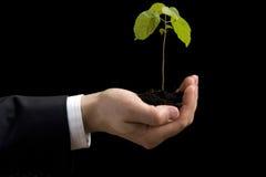 Grünpflanze in der Hand Lizenzfreie Stockfotos