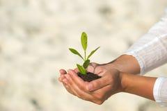 Grünpflanze in der Hand anhalten Lizenzfreie Stockfotografie