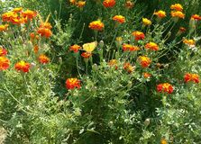 Grünpflanze des Blumenschmetterlinges stockbild