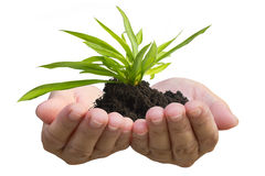 Grünpflanze, die in der Hand wächst Stockfotos