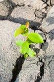 Grünpflanze, die durch Asphalt wächst Stockbild