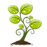 Grünpflanze, die vom Boden wächst Stockbild