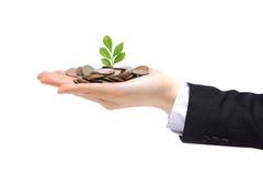 Grünpflanze, die von der Hand mit Geld keimt stockfoto