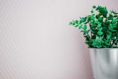 Grünpflanze in einem Blecheimer auf einem rosa Hintergrund, Kopienraum lizenzfreies stockbild