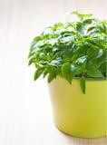 Grünpflanze in einem Topf lizenzfreies stockfoto