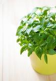 Grünpflanze in einem Topf stockbilder
