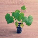 Grünpflanze in einer Plastikschale auf hölzernem Hintergrund Stockbild