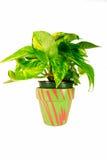 Grünpflanze in entferntem Pflanzer Stockbilder