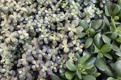 Grünpflanze-Freiexemplar-Raum Lizenzfreies Stockfoto