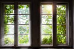 Grünpflanze gegen Fenster mit Sonnenstrahlen Stockfoto