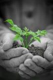 Grünpflanze gegen Schmutzhintergrund Stockfoto