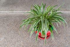 Grünpflanze im roten Vase mit Geröll Lizenzfreies Stockfoto