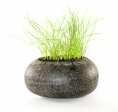 Grünpflanze im schwarzen Stein Lizenzfreies Stockfoto