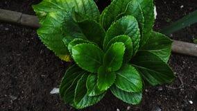 Grünpflanze im Yard stockfotografie