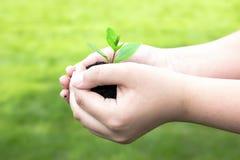 Grünpflanze mit grünem Hintergrund Stockbilder