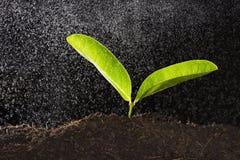 Grünpflanze mit Wassertropfen Lizenzfreie Stockbilder
