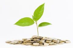 Grünpflanze und Münzen Stockfotos