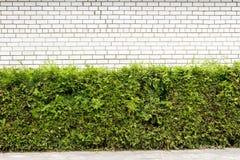 Grünpflanze und weißer Backsteinmauerhintergrund lizenzfreie stockfotos