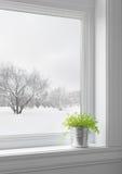 Grünpflanze und Winter gestalten gesehen durch das Fenster landschaftlich Stockfotografie