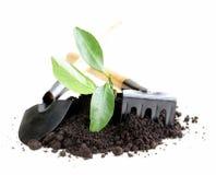 Grünpflanze wächst vom Boden mit Gartenwerkzeugen stockfotos