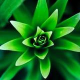 Grünpflanzeabschluß oben Stockbilder