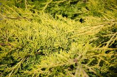 Grünpflanzebäume und -büsche auf einem heißen Sommer Lizenzfreie Stockbilder