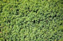 Grünpflanzebäume und -büsche auf einem heißen Sommer Lizenzfreie Stockfotos