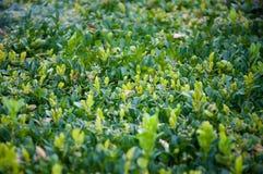 Grünpflanzebäume und -büsche auf einem heißen Sommer Stockfoto
