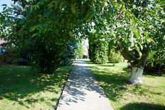Grünpflanzebäume und -büsche auf einem heißen Sommer Stockbild