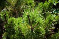 Grünpflanzebäume und -büsche auf einem heißen Sommer Lizenzfreies Stockfoto