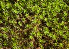 Grünpflanzebeschaffenheit Lizenzfreies Stockfoto