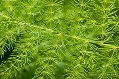 Grünpflanzehintergrund Stockbild