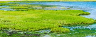 Grünpflanzeinsel im Wasserpanorama Stockfotografie