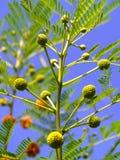 Grünpflanzeleben Lizenzfreies Stockfoto