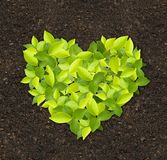 Grünpflanzen stockfoto